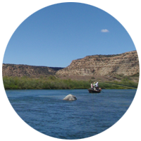 San Juan River Fly Fishing in New Mexico