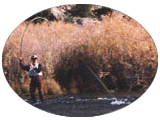 San Juan River Trout on a Fly