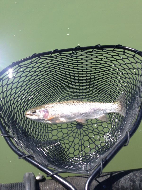 Fishing Report for March 26, 2014